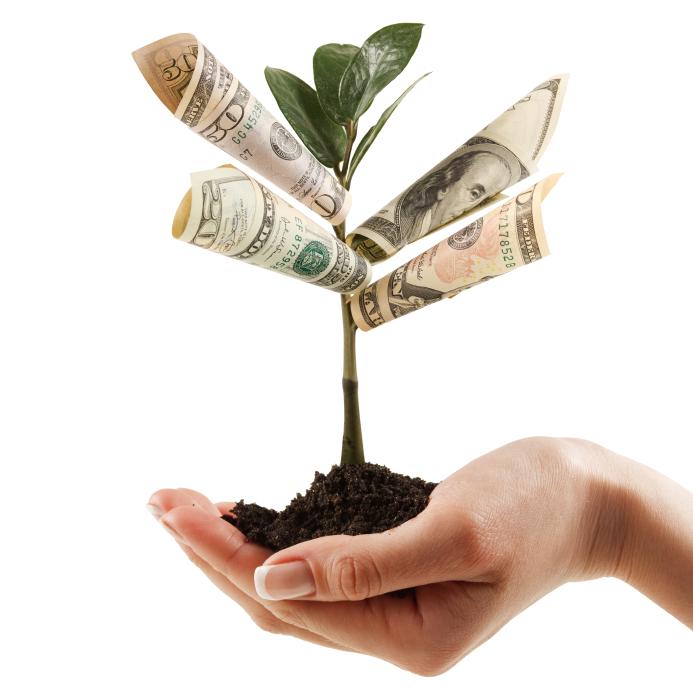 pieniądze na drzewie